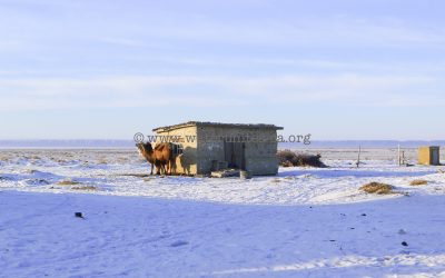 Aral Sea in winter